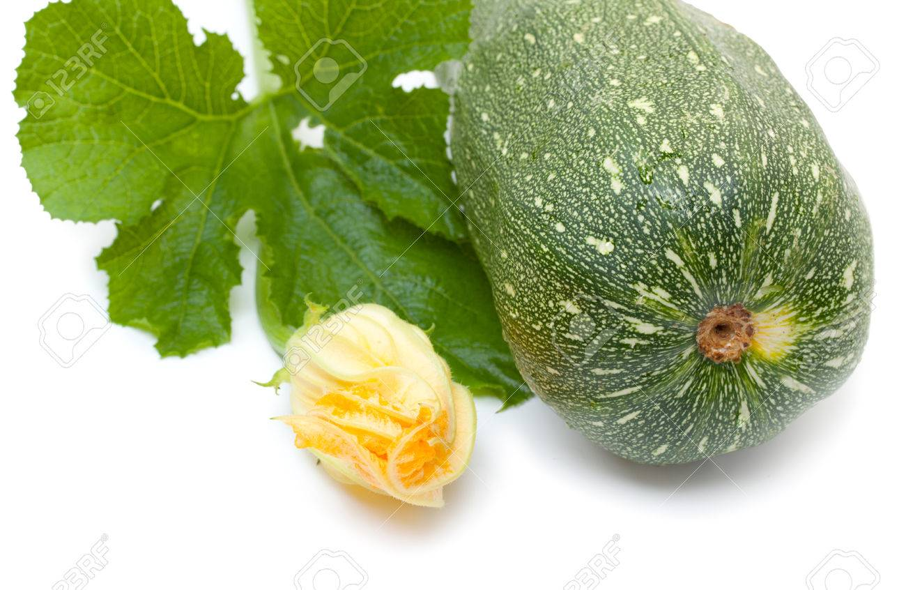 Vegetable marrow squash zucchini with flower and green leaves stock photo vegetable marrow squash zucchini with flower and green leaves isolated on a white mightylinksfo