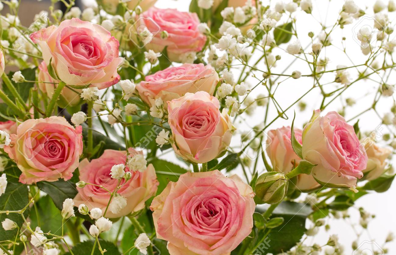 Small Decorative Pink Roses With Small White Flowers Close Up