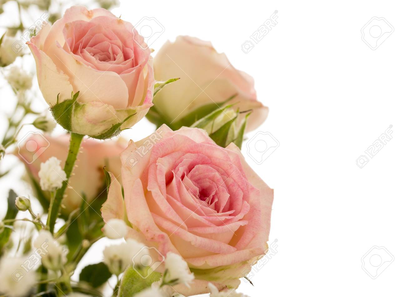 Bouquet Of Small Decorative Pink Roses With Small White Flowers
