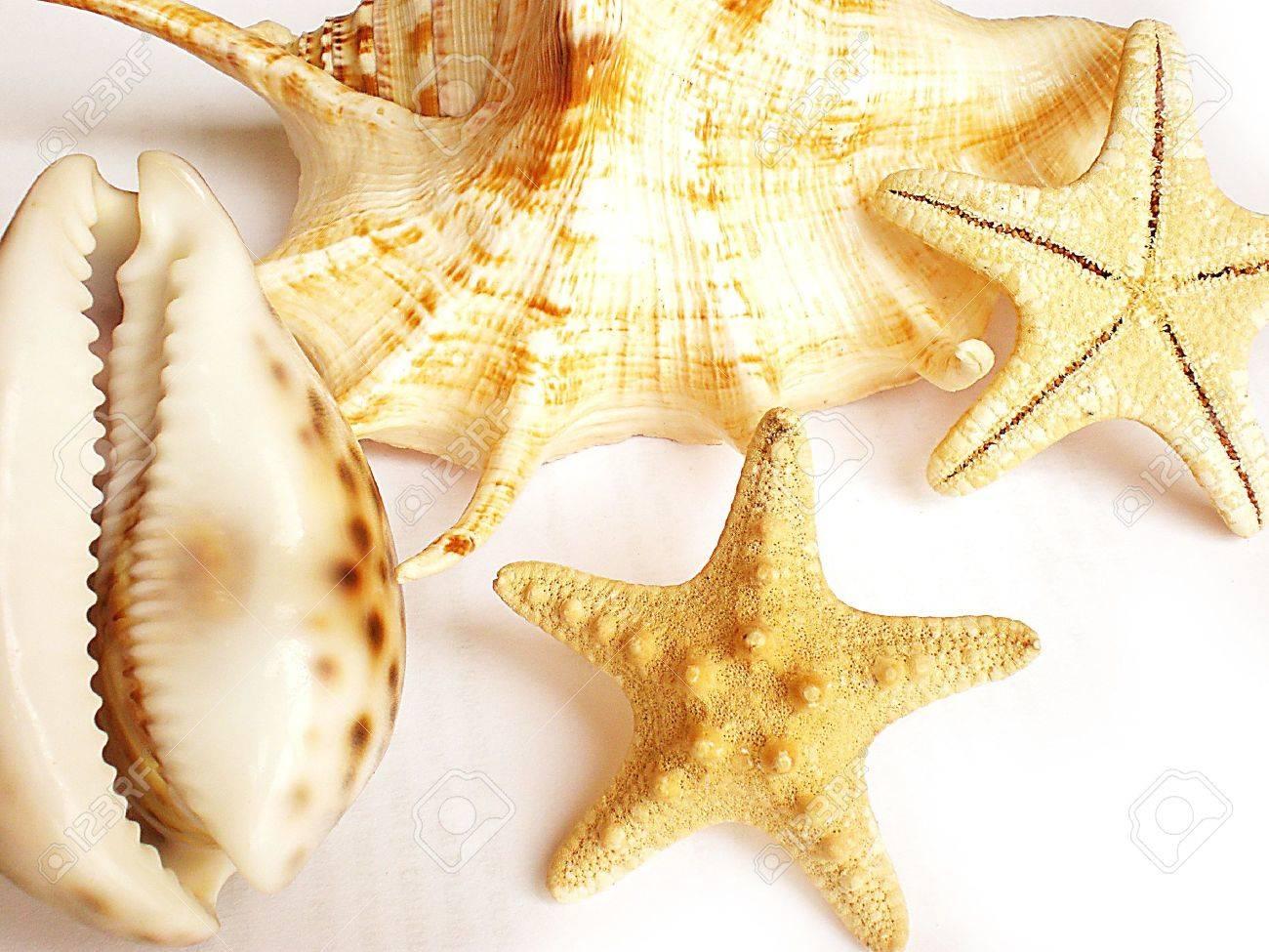 shells Stock Photo - 3145254