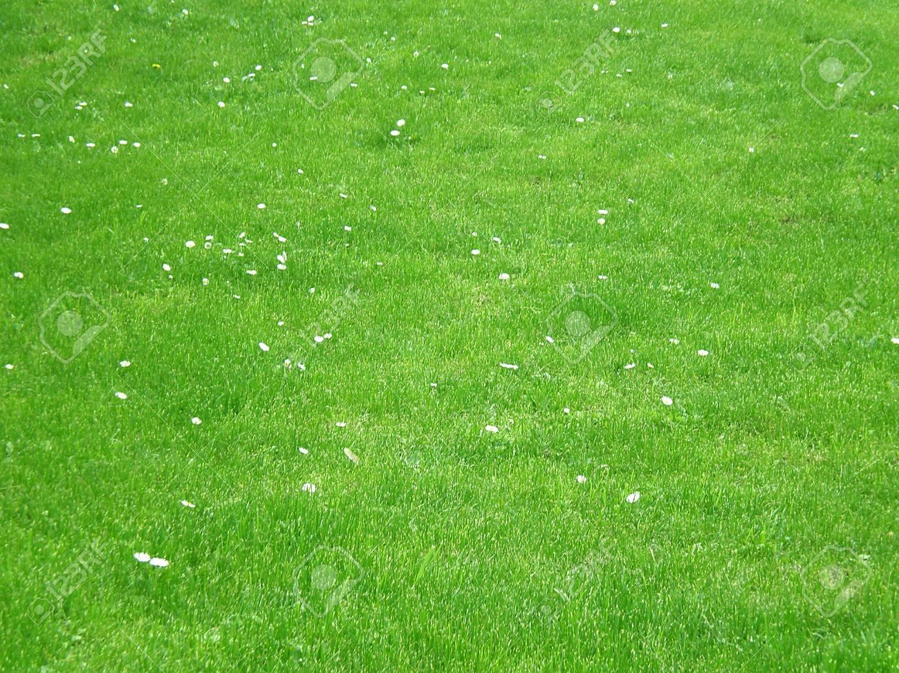 green grass Stock Photo - 3212630