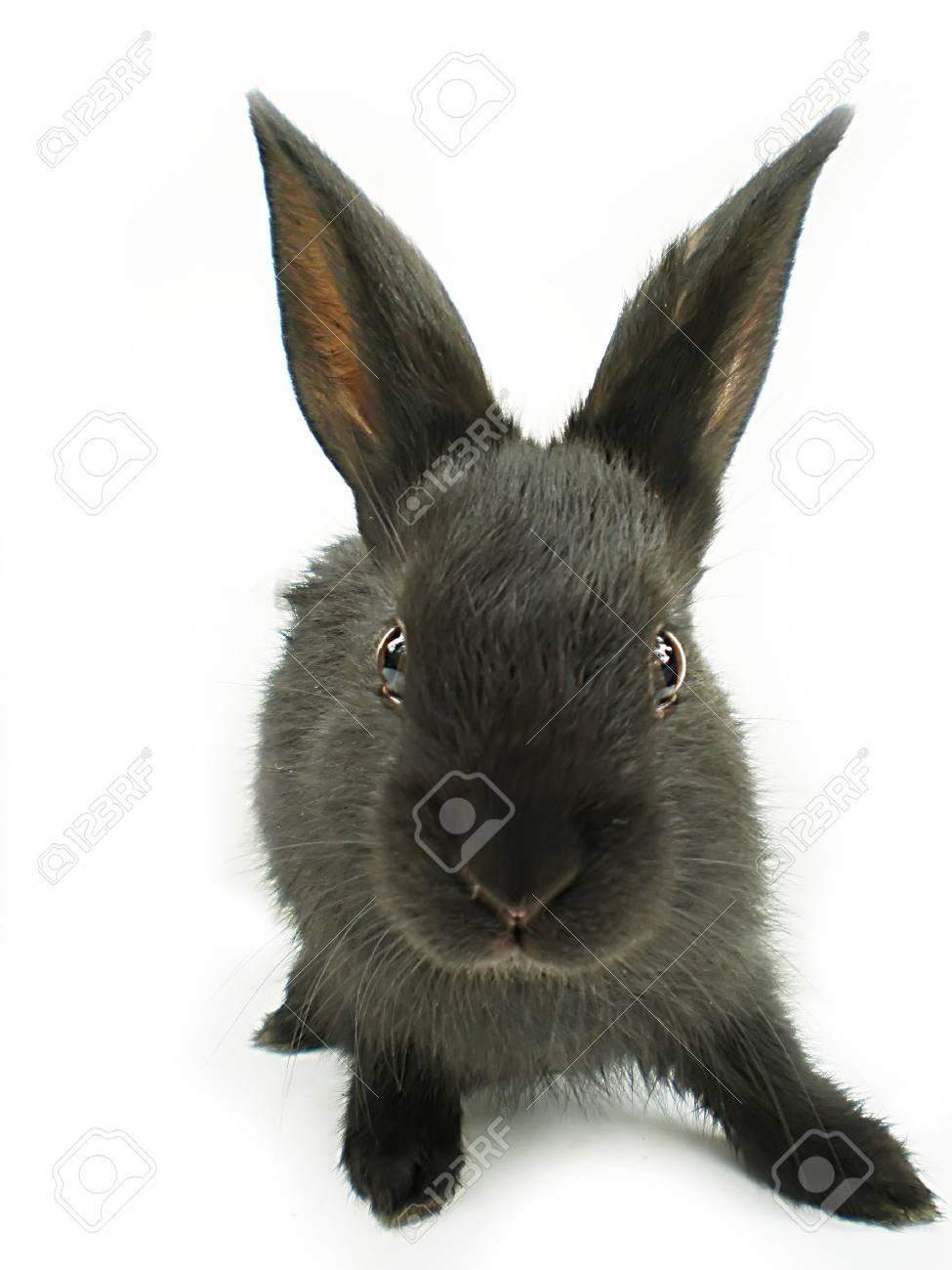 rabbit Stock Photo - 3261307