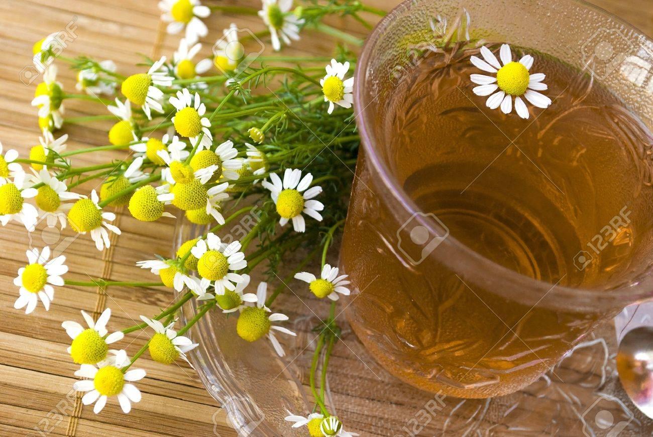 chamomile tea on wooden mat with fresh herbs Stock Photo - 9797517