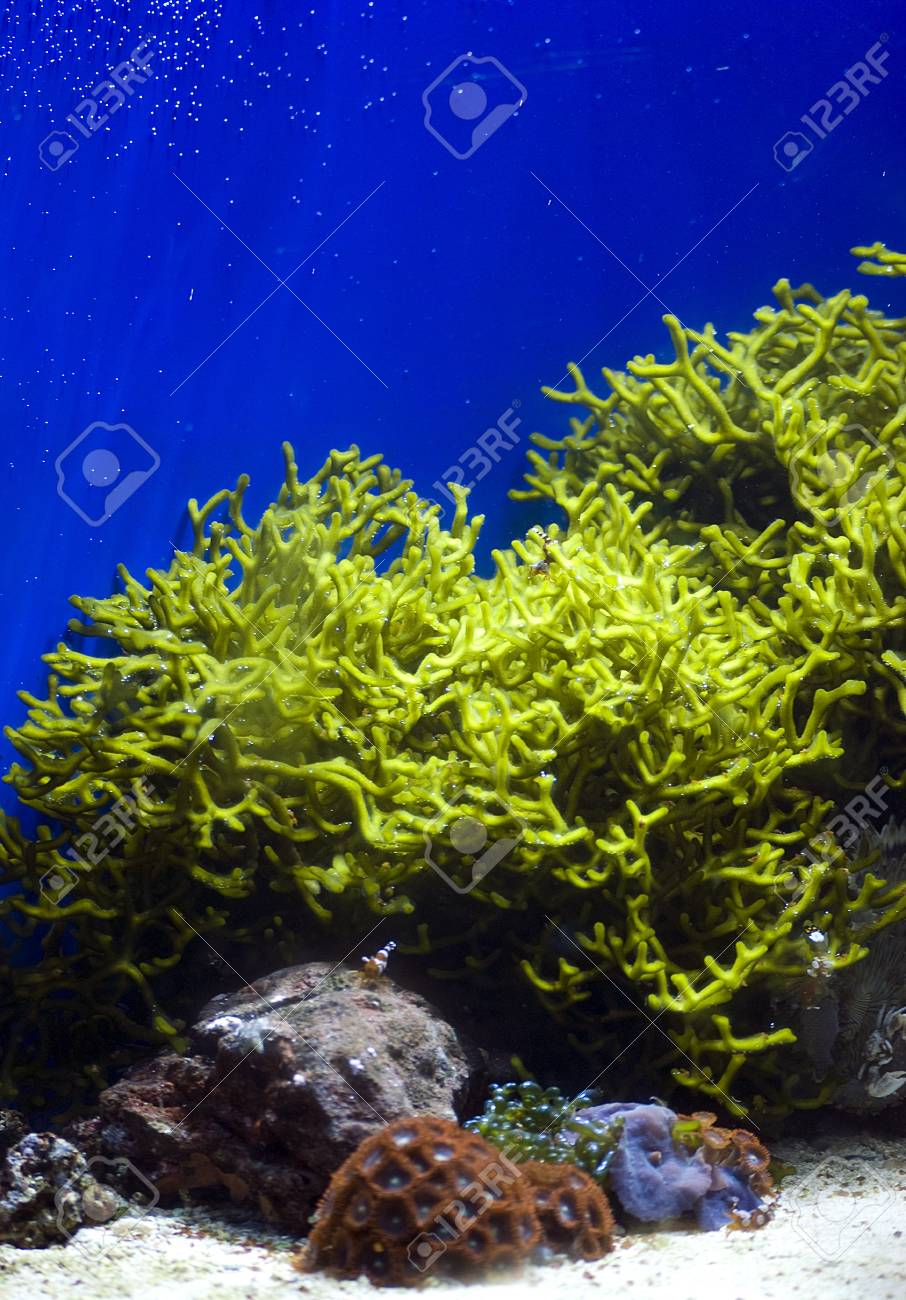 aquarium with colorful tropical fish and corals Stock Photo - 11968831