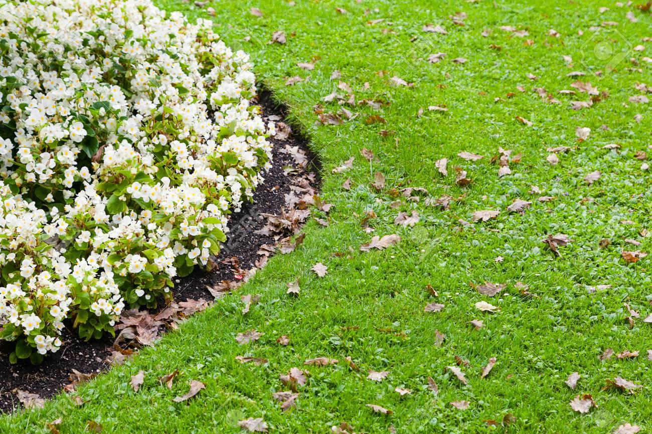 White Flowerbed And Green Grass Stock Photo Picture And Royalty