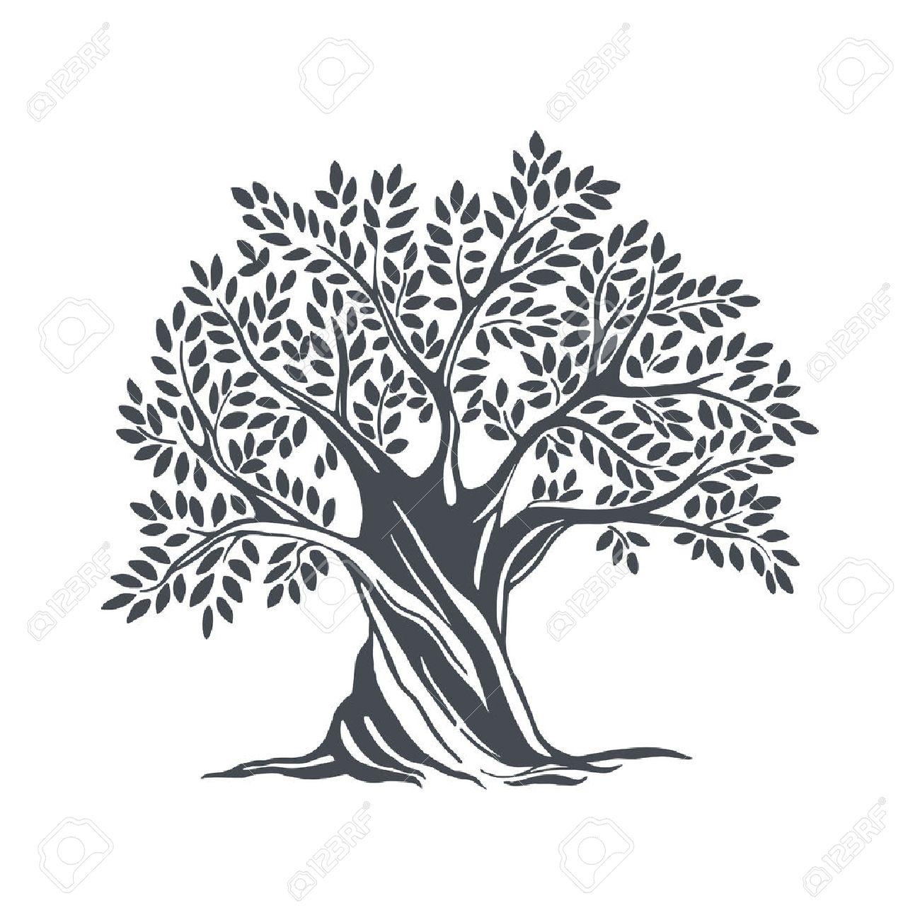 Hand drawn olive tree. Vector sketch illustration - 69775119