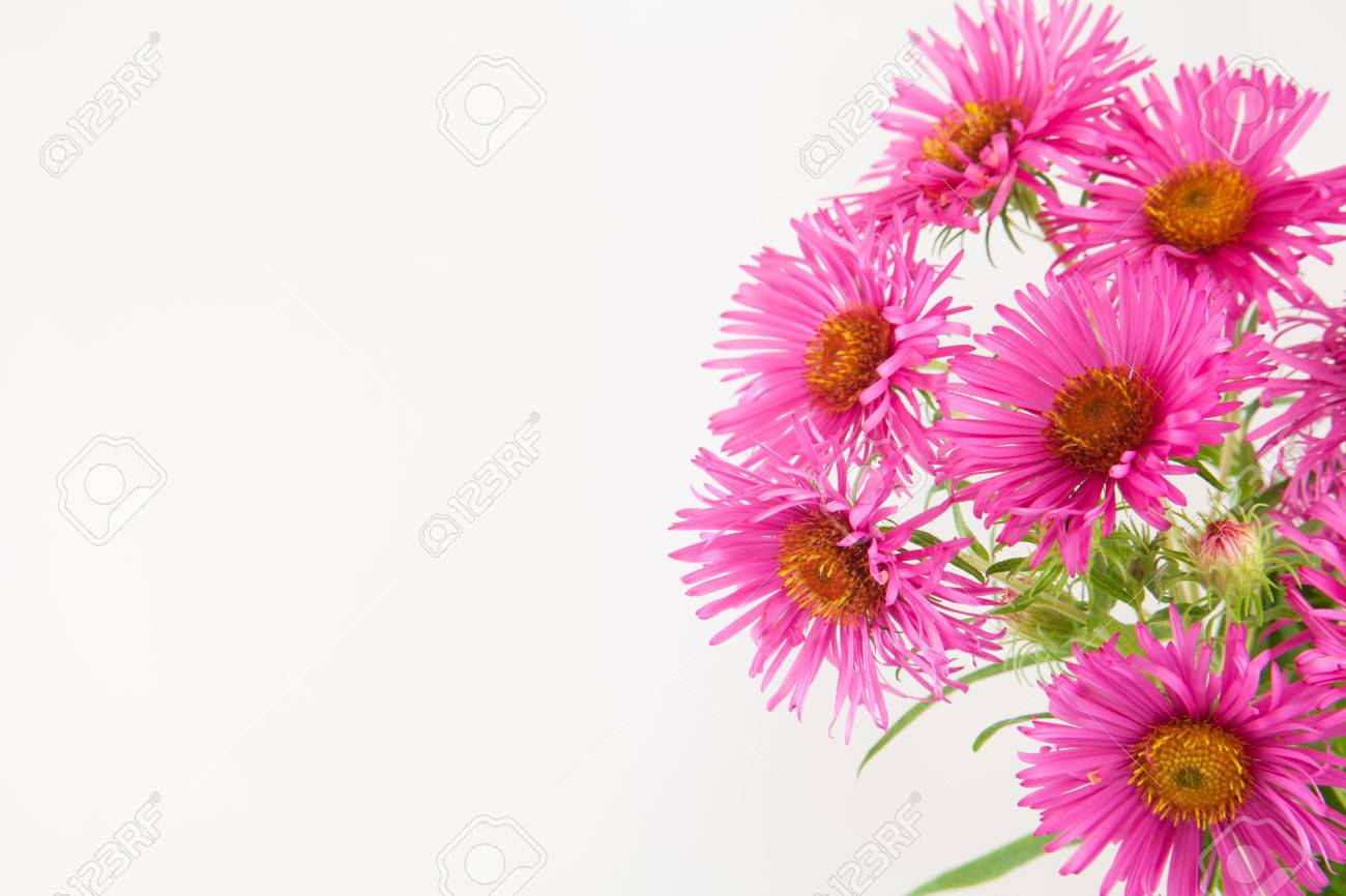 Hot Pink Bunch Of Flowers Half Frame Border Isolated On White Stock