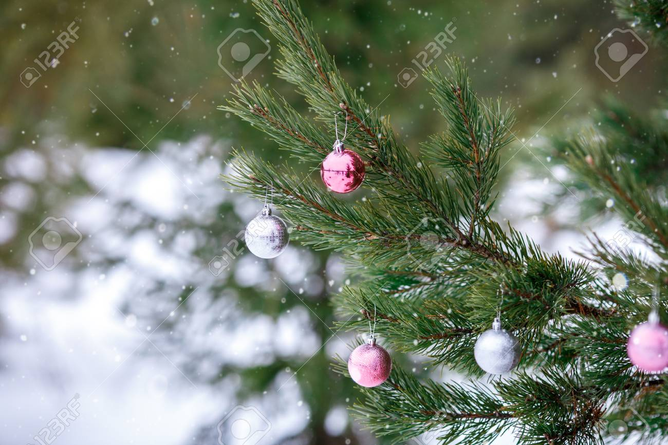 Christmas Pink And Silver Balls On A Christmas Tree Branch Over