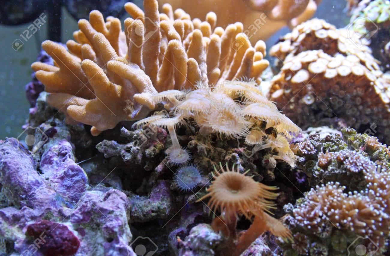 pretty coral Stock Photo - 9485037