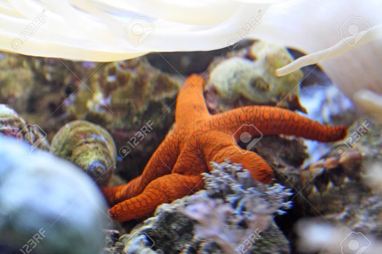 orange star fish Stock Photo - 9485036