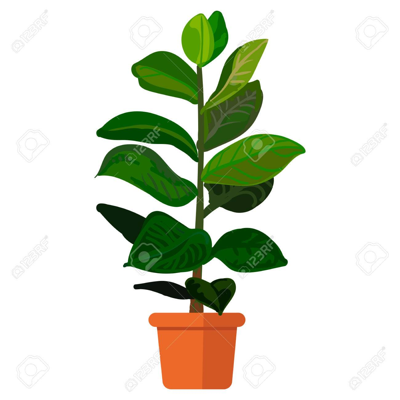 Illustration Plant In Pot Rubber Plant In Pot Royalty Free Cliparts Vectors And Stock Illustration Image 57228977