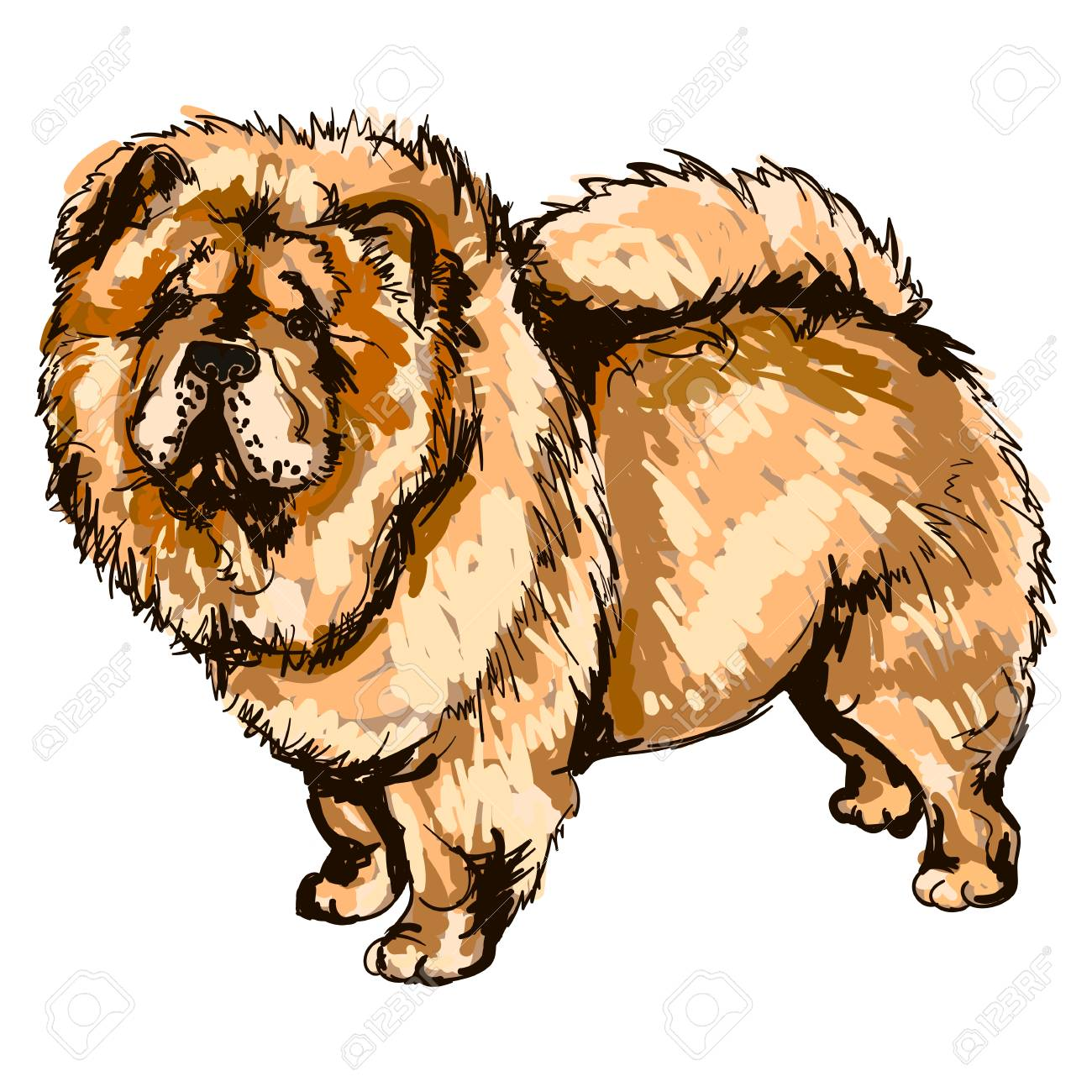 Illustration Of Dog Breed Chow Chow Royalty Free Cliparts Vectors And Stock Illustration Image 87266739
