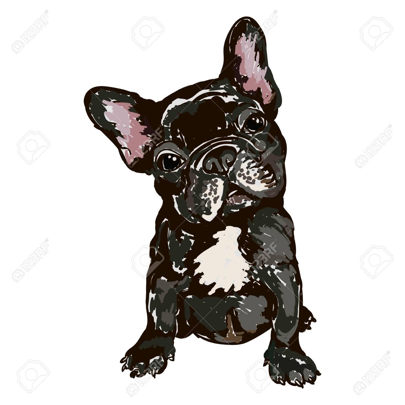 犬種フレンチ ブルドッグのイラストのイラスト素材ベクタ Image