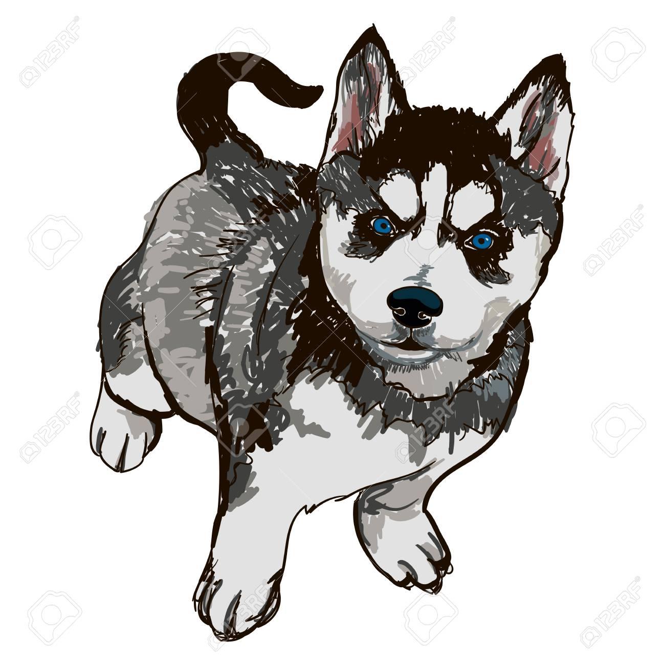 犬の品種品種ハスキーのイラストのイラスト素材ベクタ Image 87266742