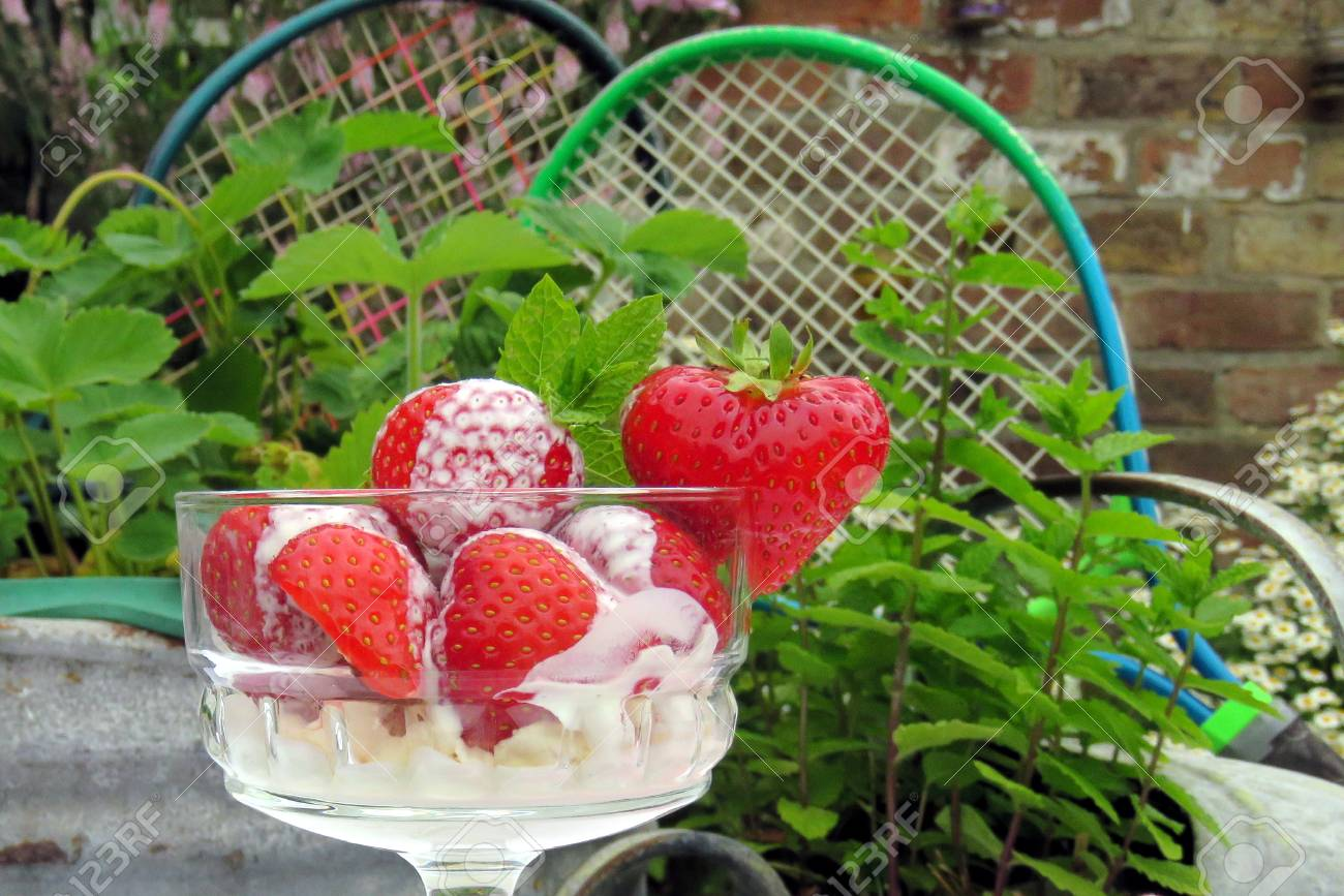 Strawberries and Tennis A bowl of strawberries and cream in front of a tub of strawberry plants and a mint plant with tennis rackets in the background. Standard-Bild - 53049577