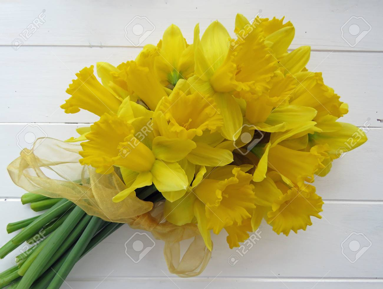 Large bunch of Spring daffodils tied with a yellow ribbon against a white wooden  background.       Space for text. Standard-Bild - 81938119