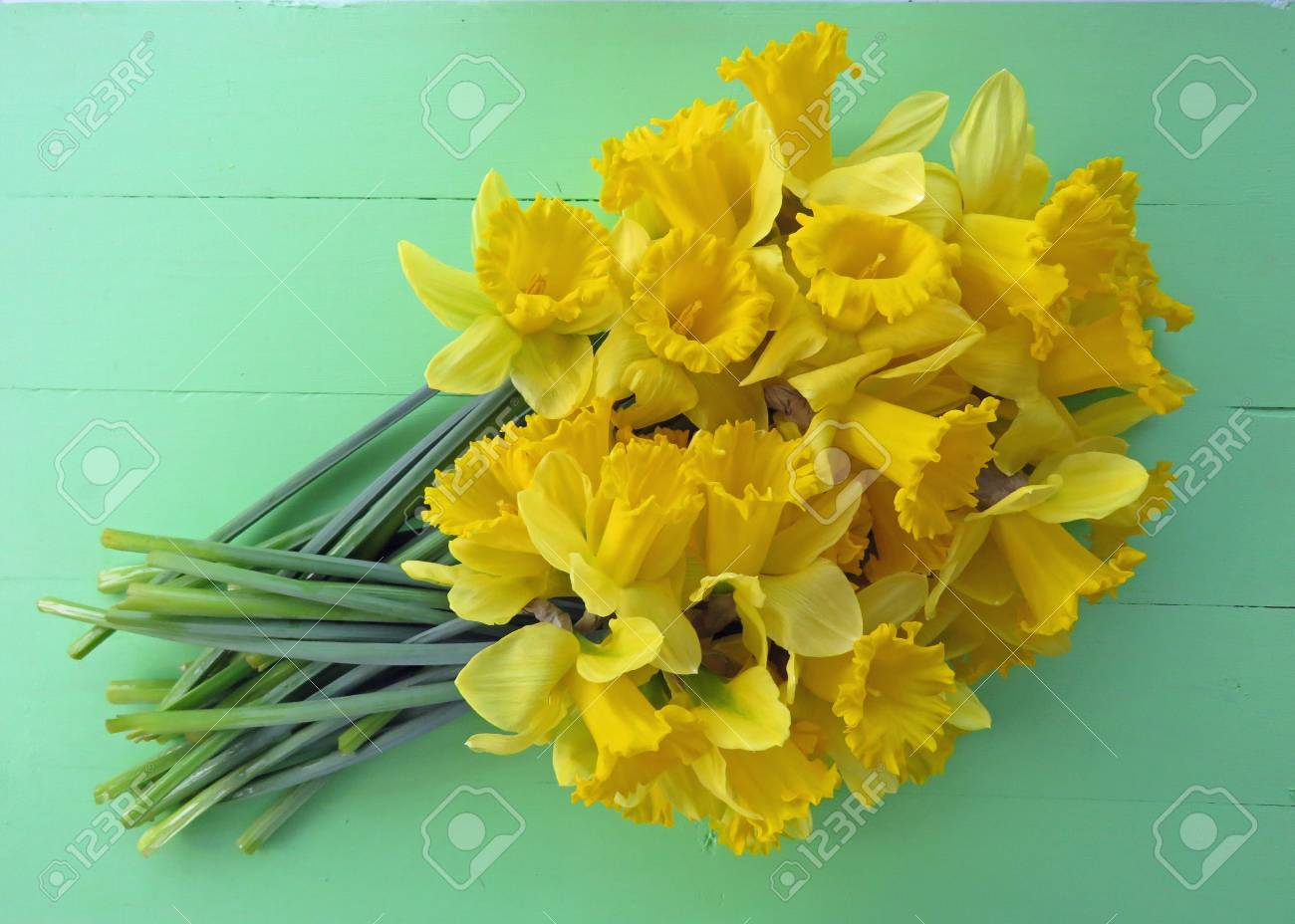 Large bunch of Spring daffodils against a bright green wooden  background. Space for text. Standard-Bild - 81878199