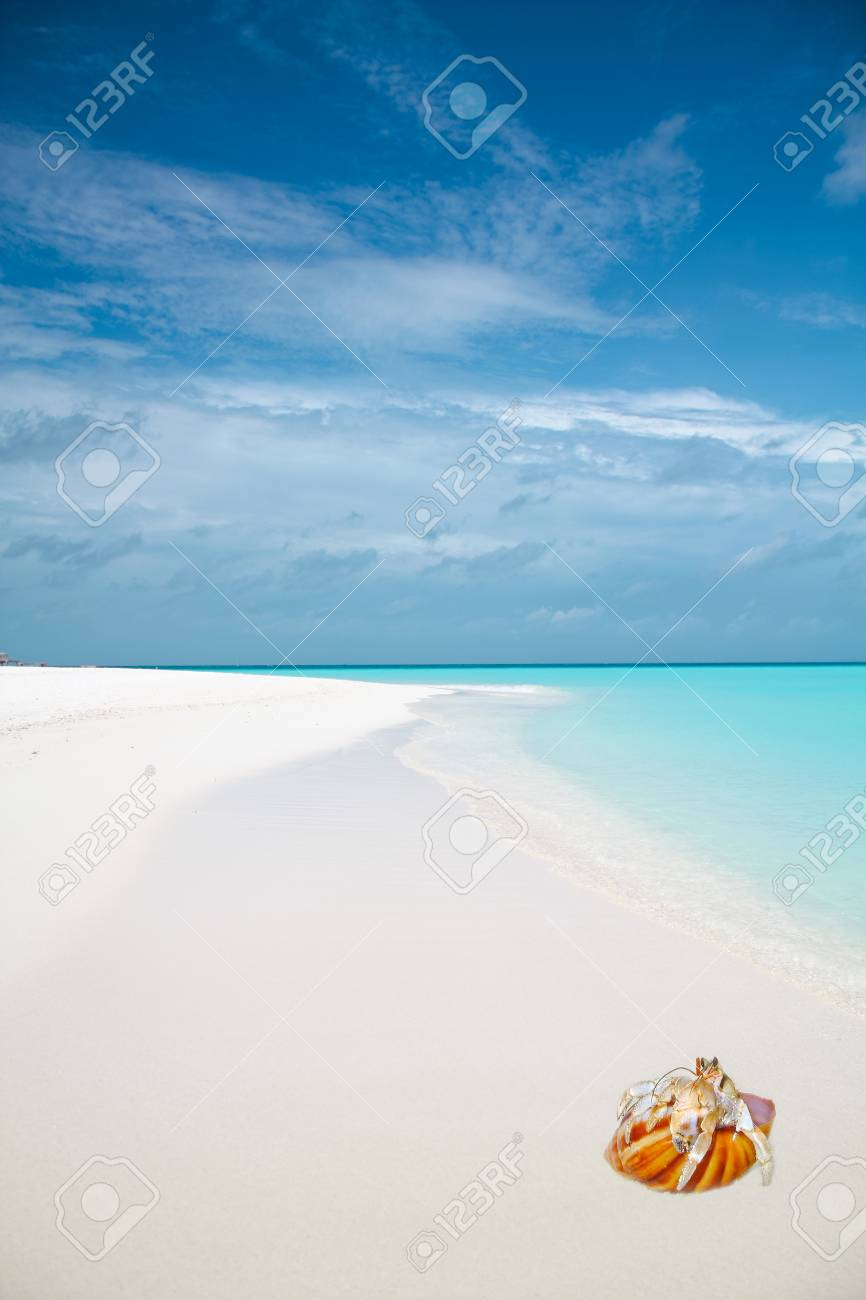 Shellfish on white sand near ocean water Stock Photo - 12056959