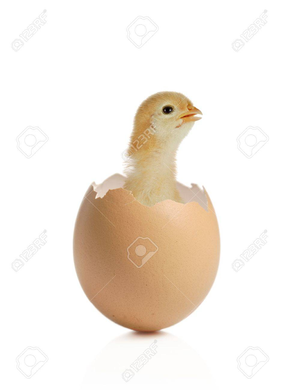 activated chicken eggshells as novel chelating