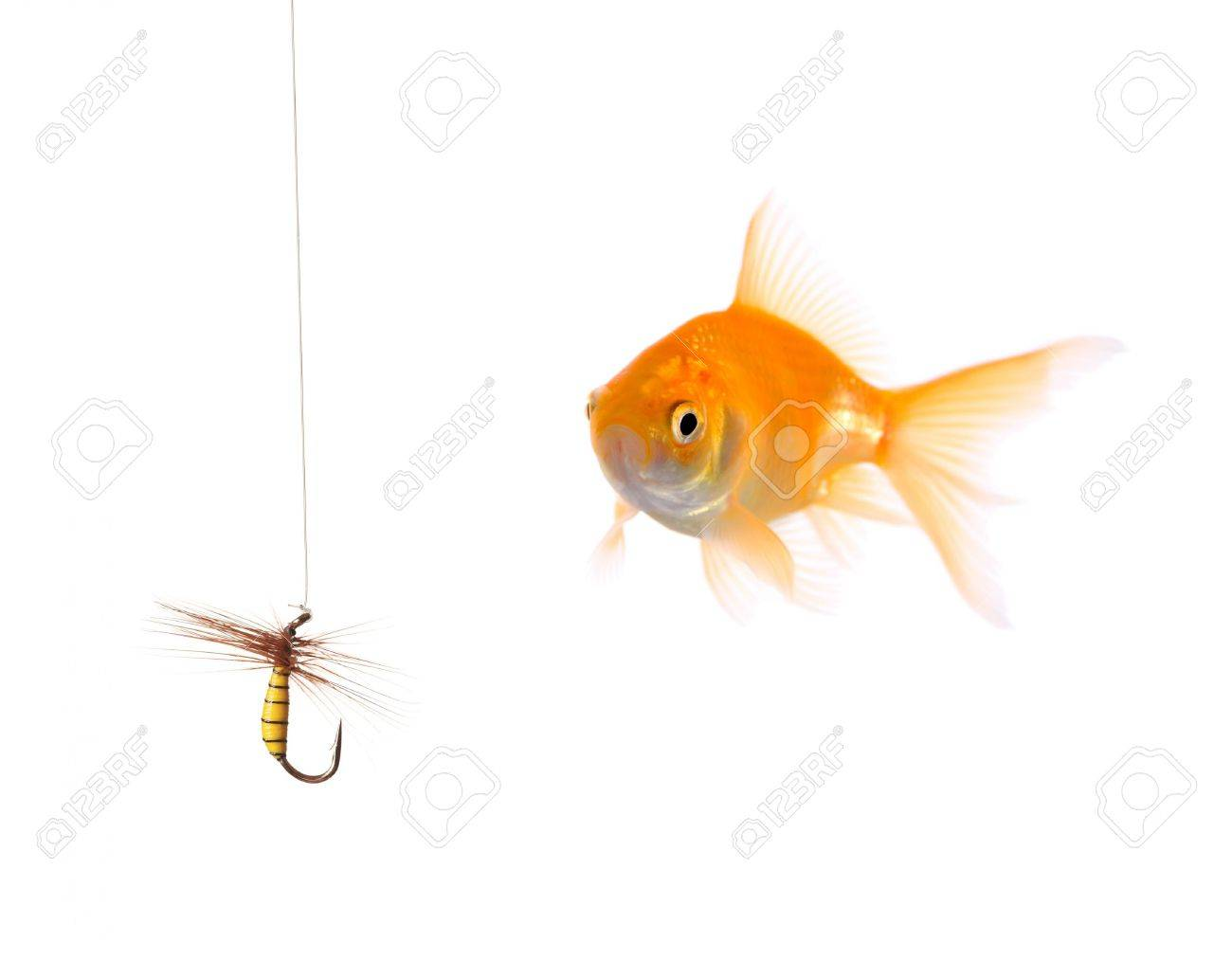 Golden fish and a fishing bait Stock Photo - 3375097