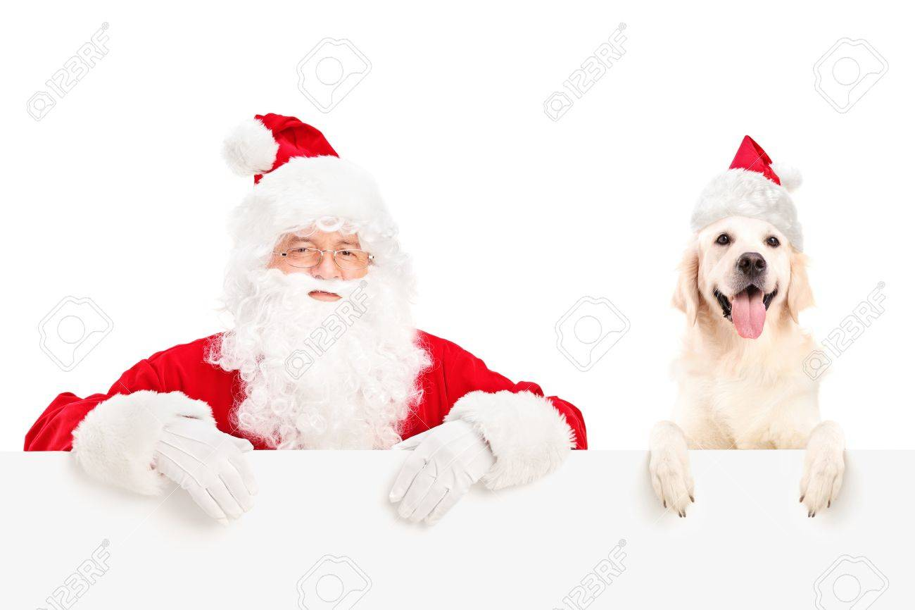 Santa Claus and dog wearing christmas hats and posing behind a billboard isolated on white background Stock Photo - 16243177