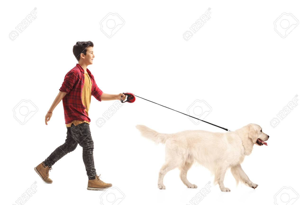 Full length portrait of a little boy walking a dog isolated on white background - 68915982