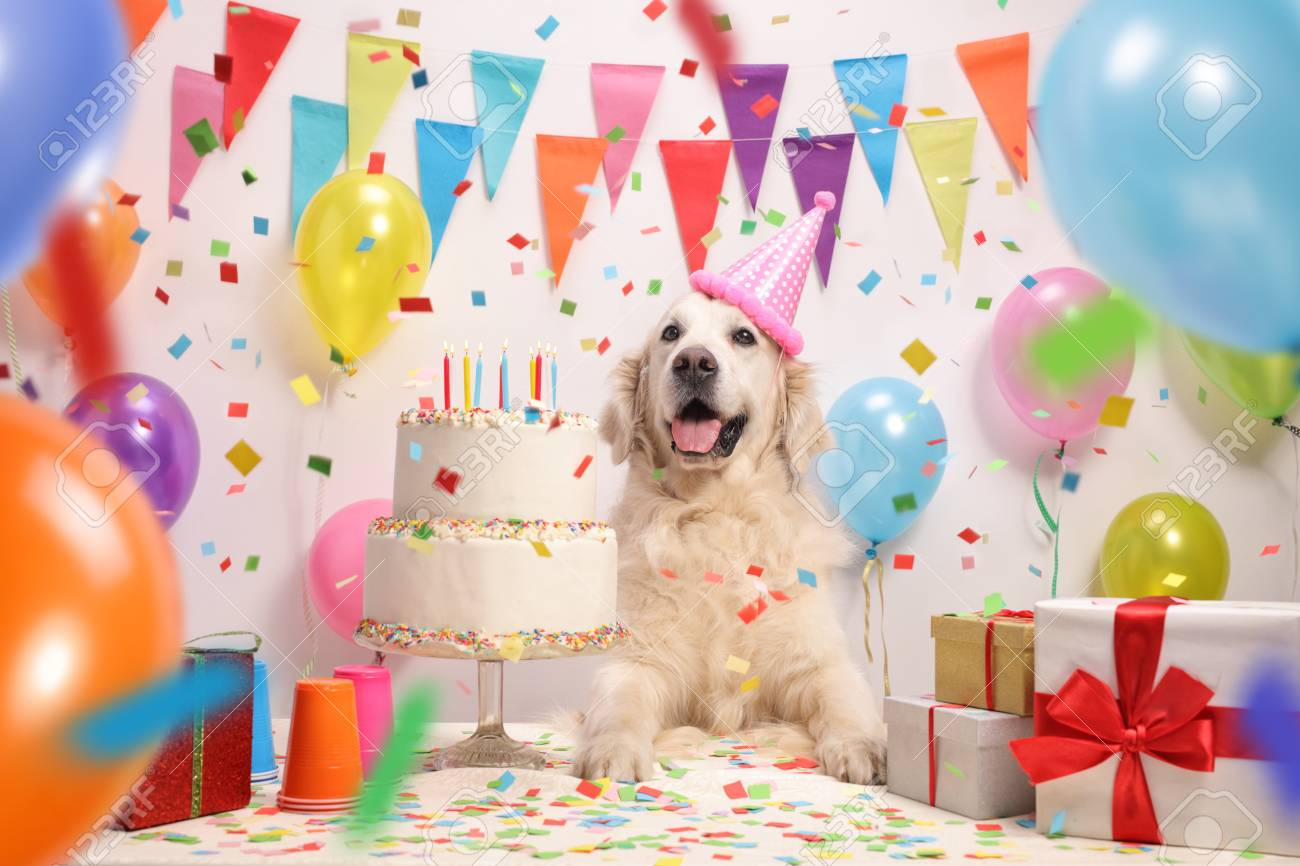 Labrador Retriever Dog With A Birthday Cake And Party Hat Stock Photo