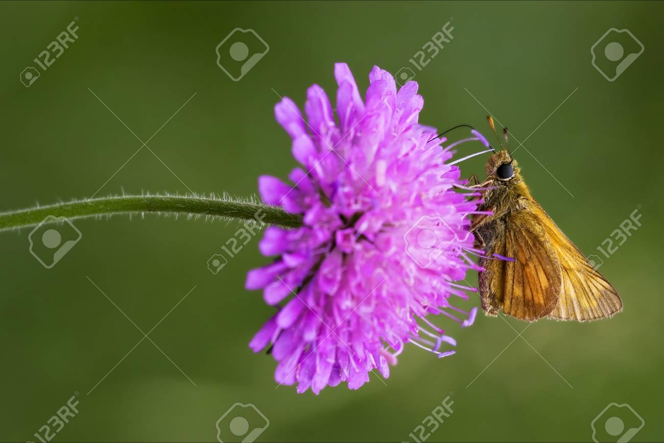 Naranja Pequeña Mariposa En Reposo En Una Flor De Color Rosa Y Verde ...