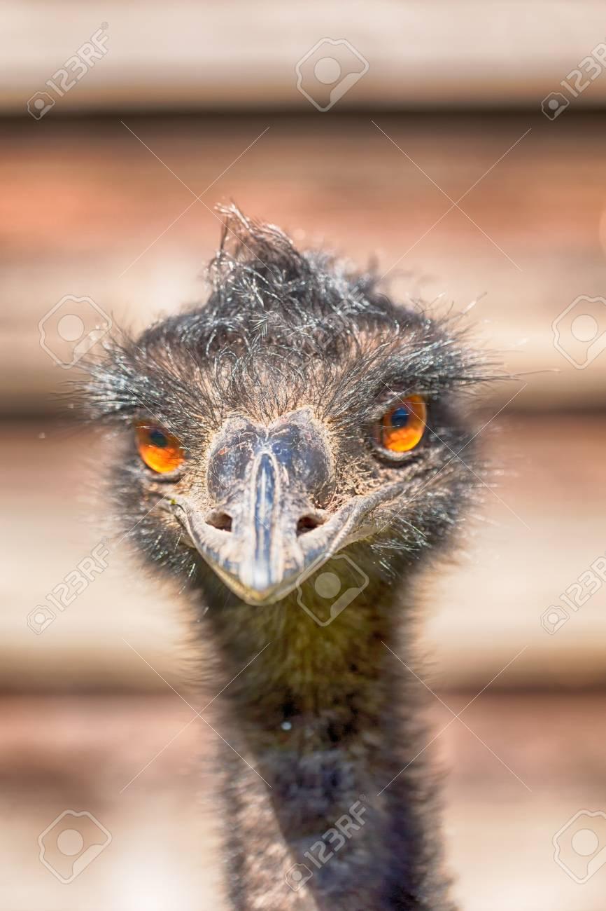 Image result for royalty free images emu