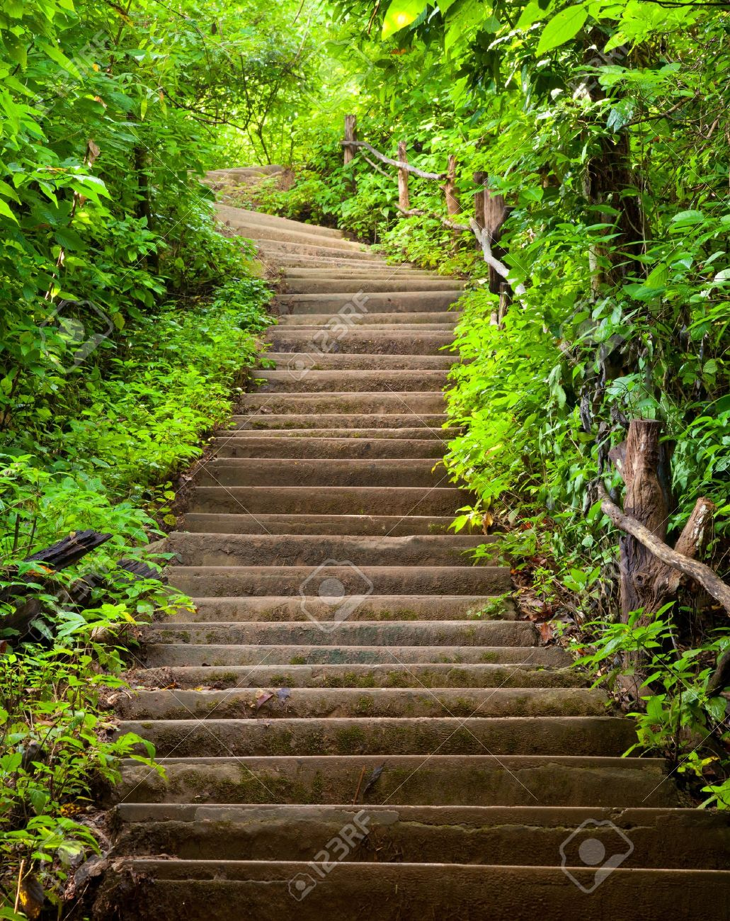 Stairway to forest Stock Photo - 10846510