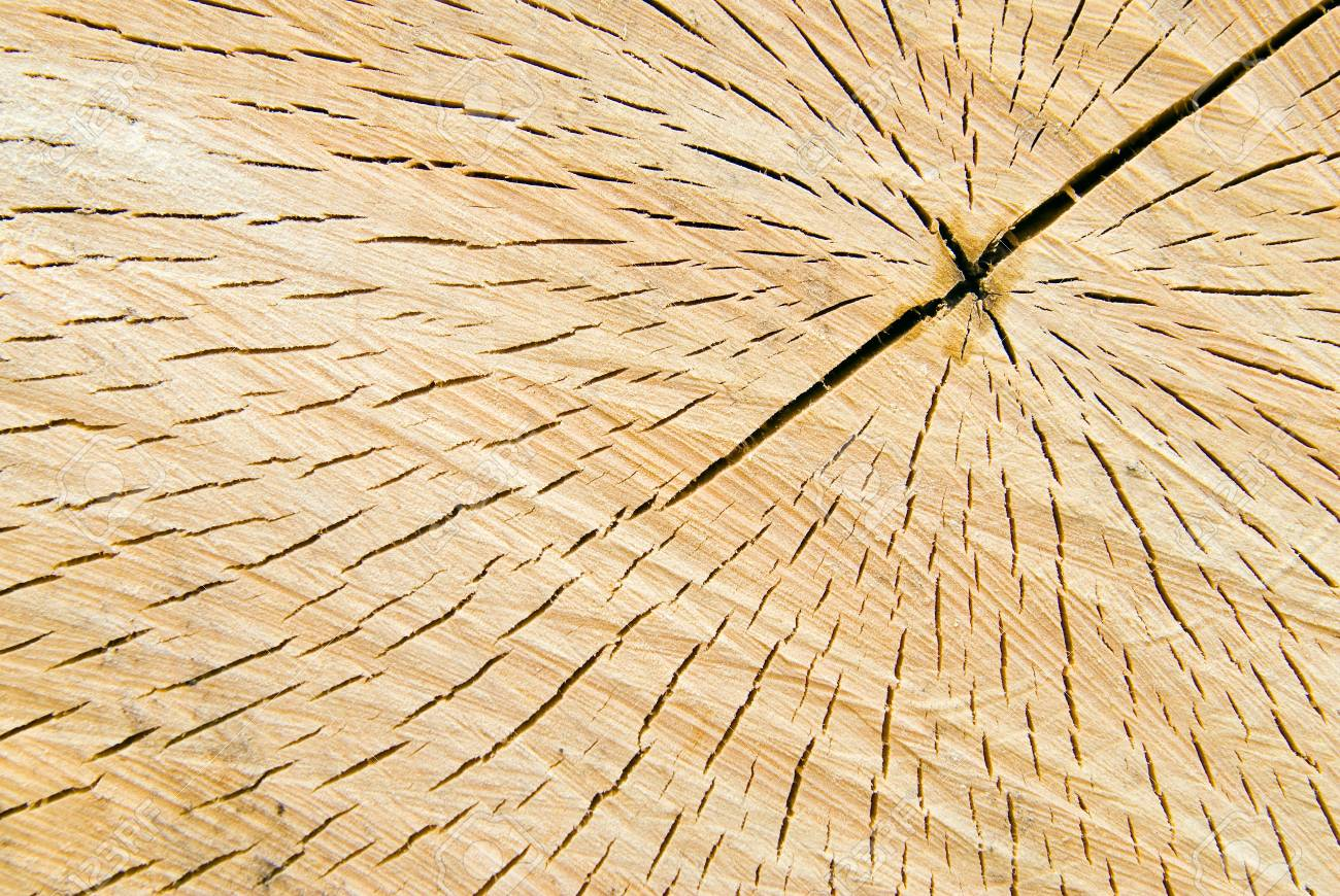 Saw cut of a tree with annual rings Stock Photo - 4560852