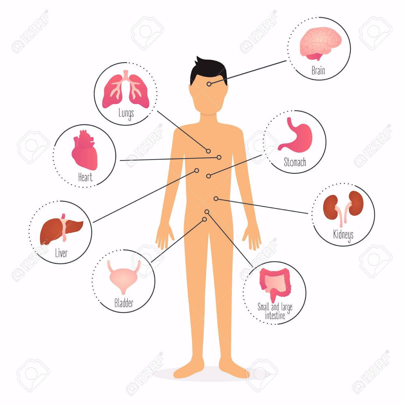 Human Body With Internal Organs. Human Body Health Care Infographics ...