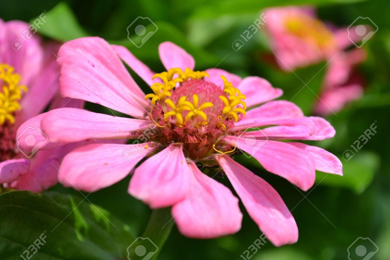 Blumengarten Schone Blumen Blumen Karte Postkarte Fur Die
