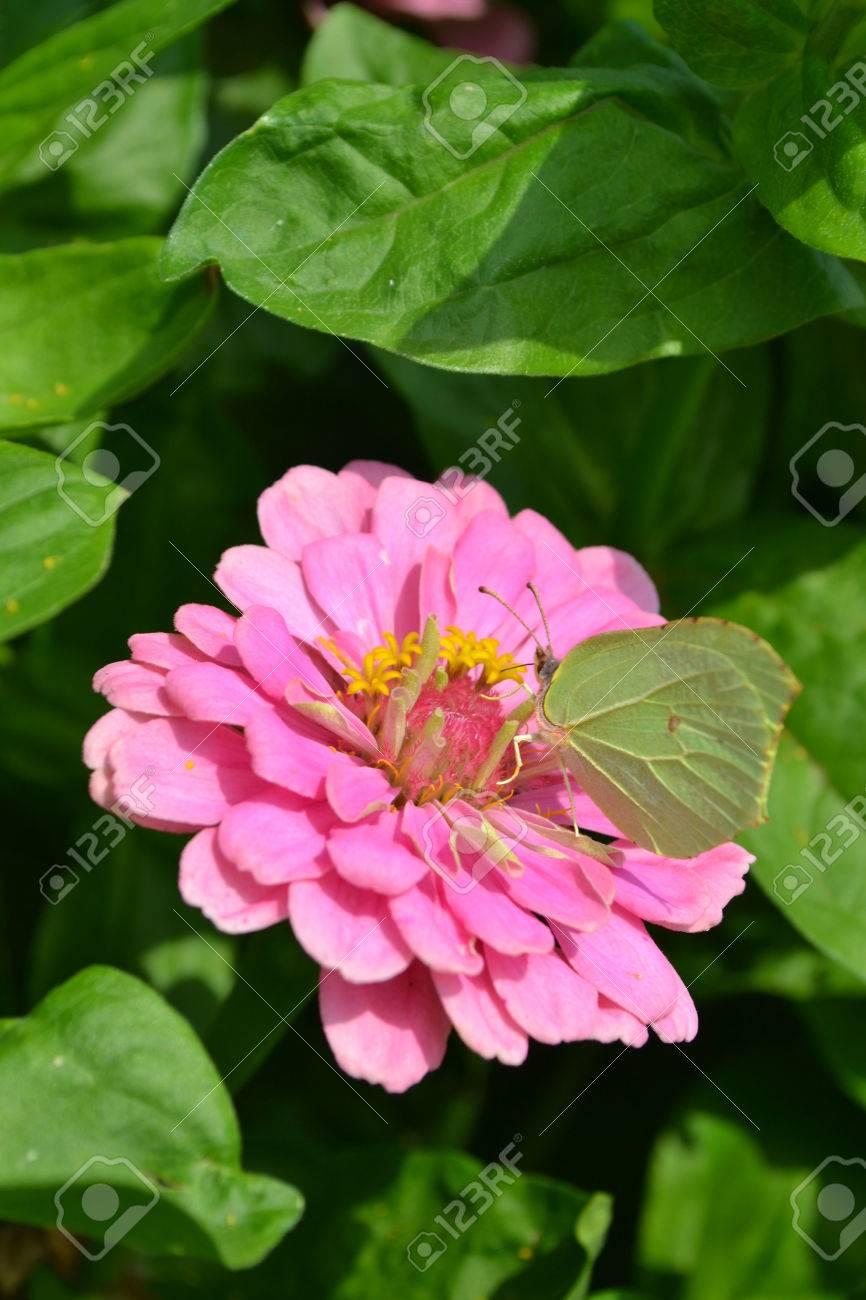 Jardin, De Belles Fleurs, Carte Fleurs De Voeux, Carte Postale, Pour Les  Félicitations, Des Fleurs Fraîches, Fleurs Du0027été, Fleurs En Juin, De Fleurs  Juillet ...