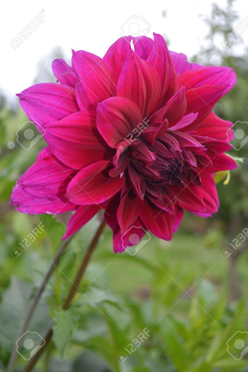 Imagenes De Flores Hermosas Rojas