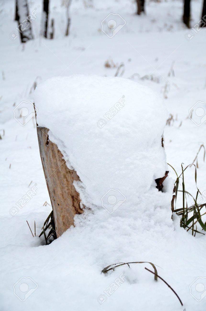 Snow lies on a hemp Stock Photo - 17272325