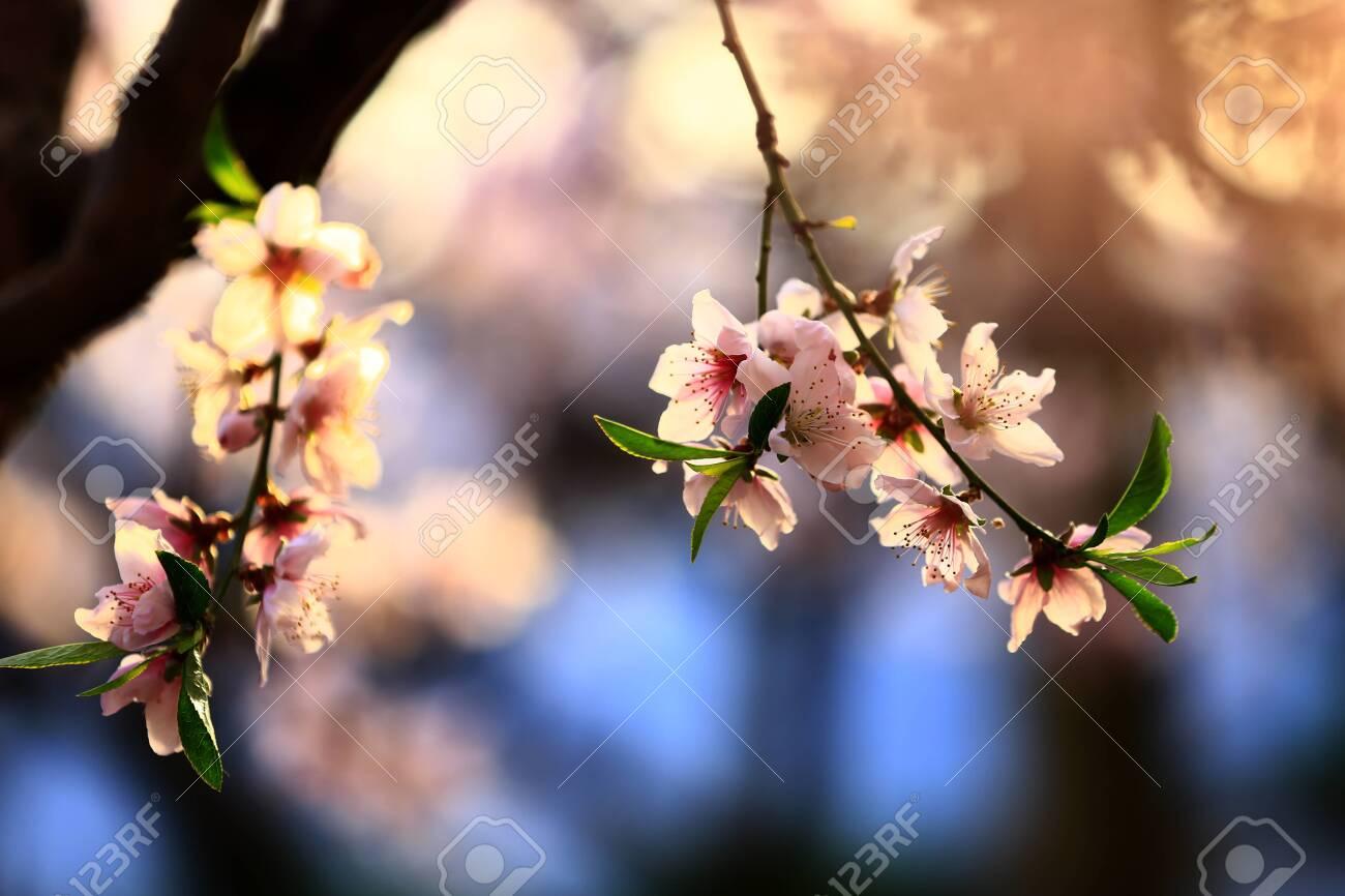 peach blossom - 137546858
