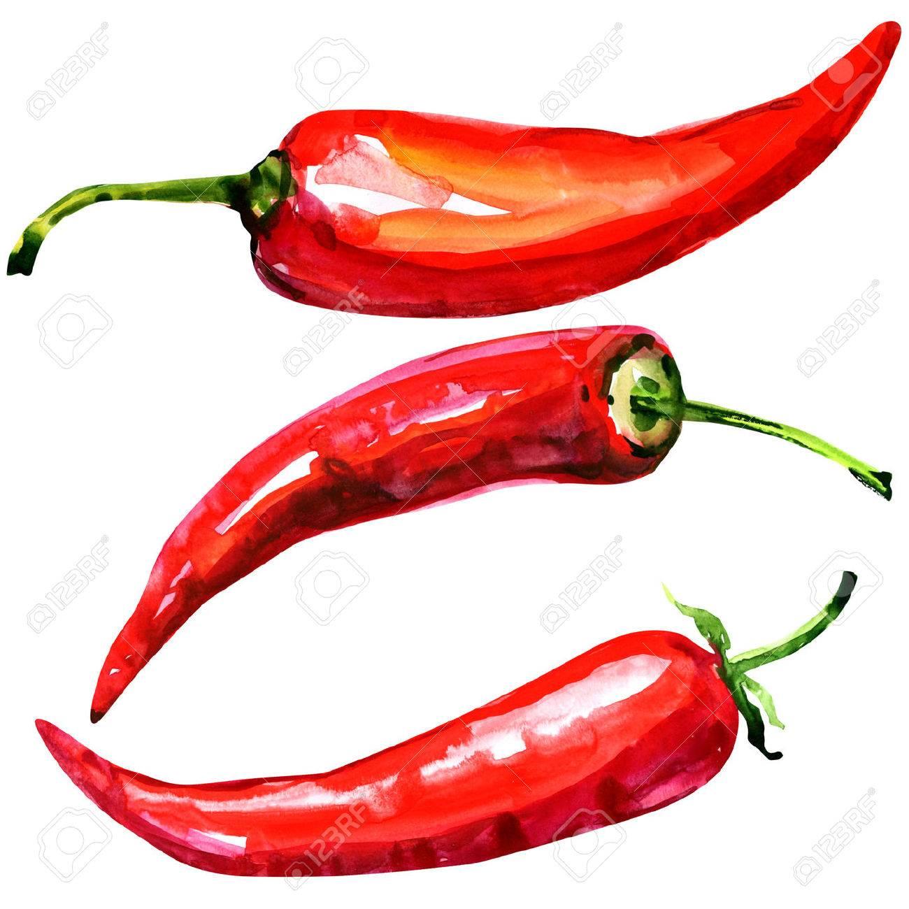 Chili Bilder chili peppers aquarell auf weißem hintergrund lizenzfreie