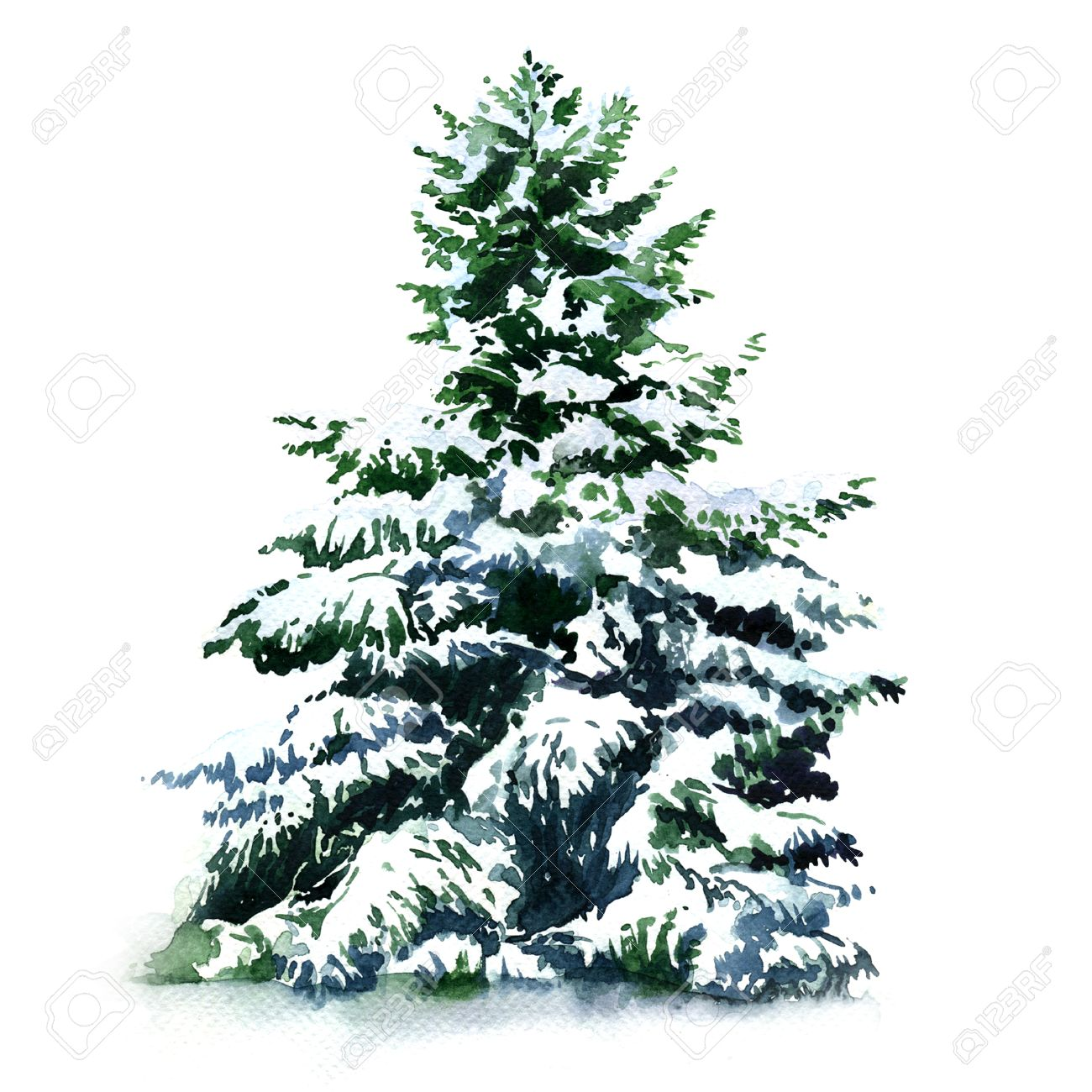 Christmas Tree Covered Snow In Winter Isolated Watercolor Painting