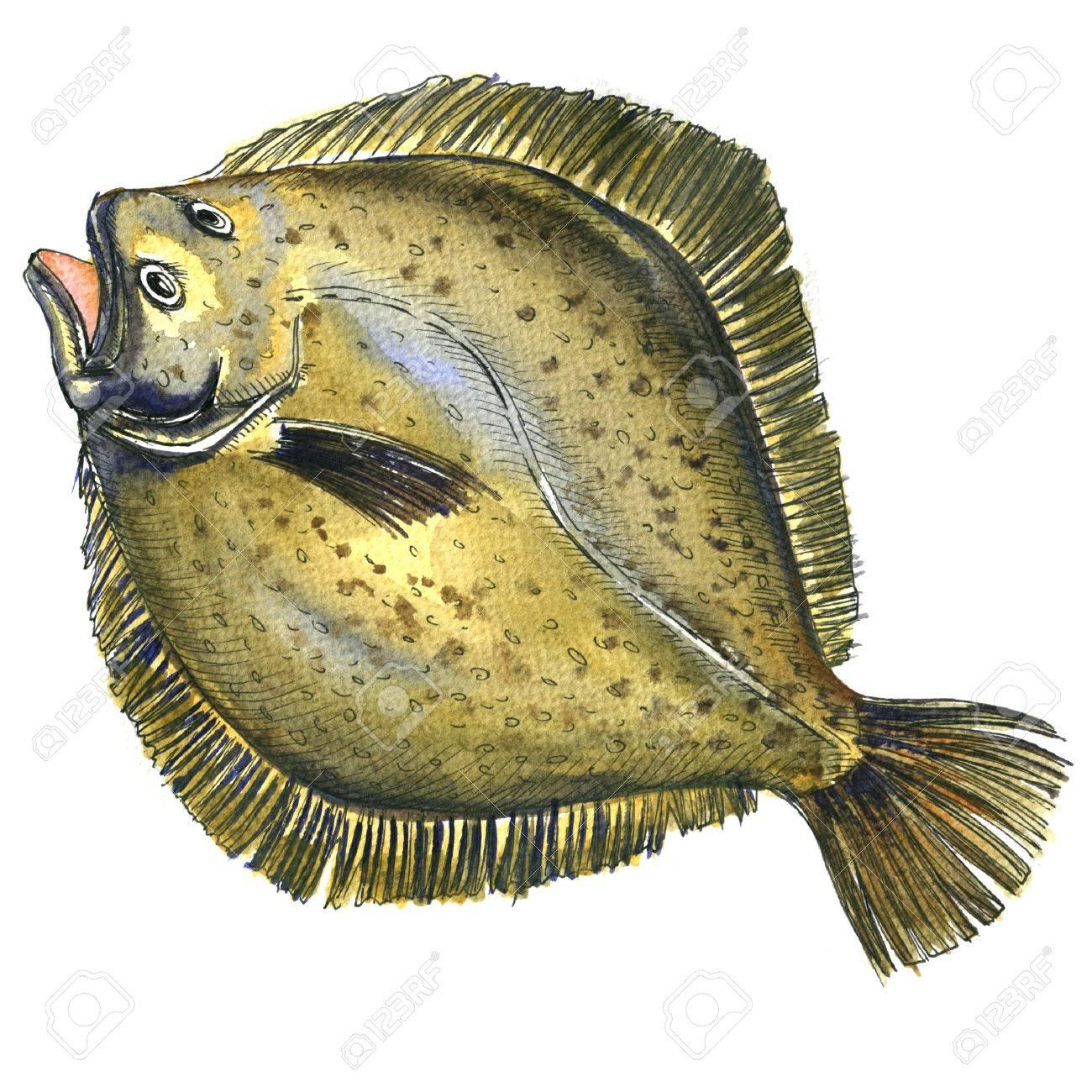 全体の新鮮な生のカレイ魚カレイヒラメ白い背景の分離水彩の