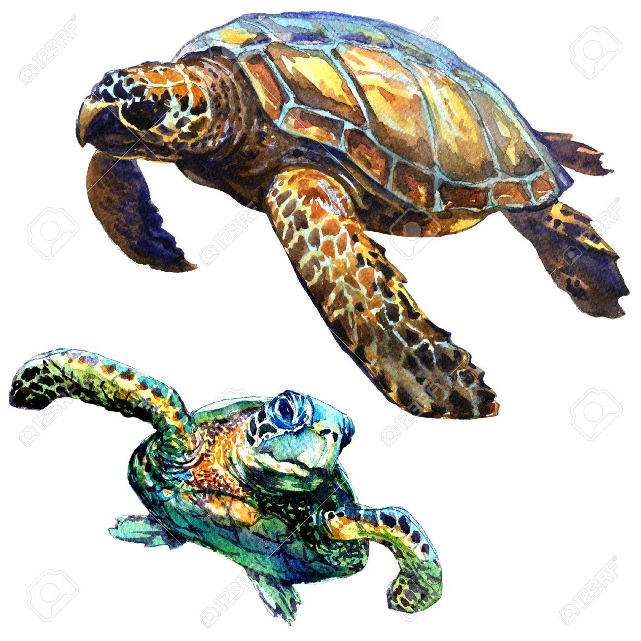 Tolle Malvorlagen Von Meeresschildkröten Bilder - Entry Level Resume ...