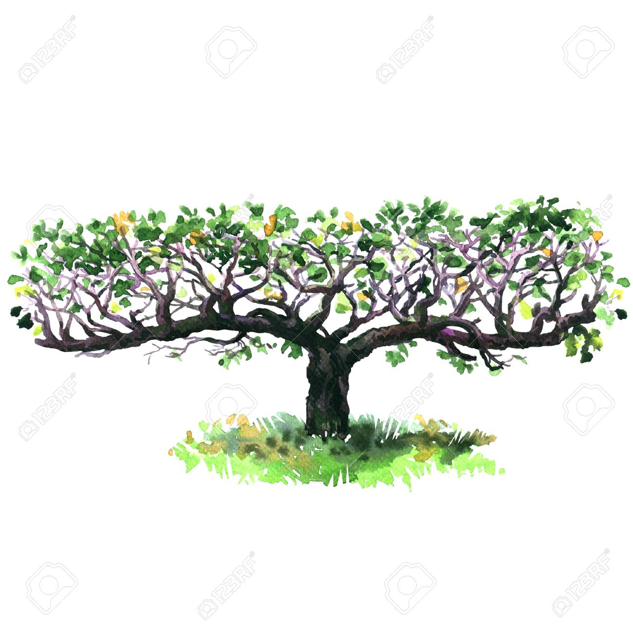 Espalier Apple Tree Isolated Decorative Fruit Trees Hand Drawn