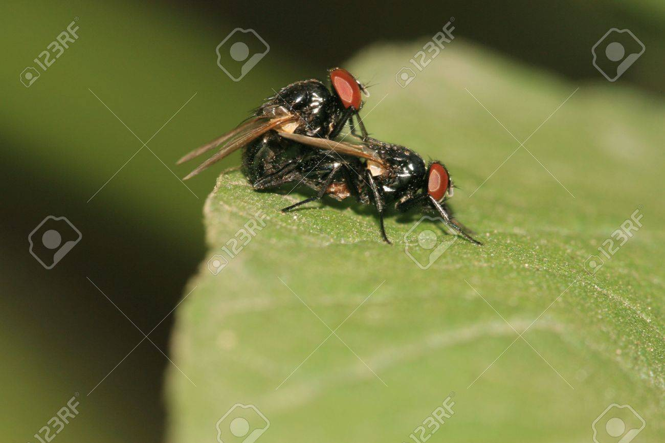 fly Stock Photo - 4786530