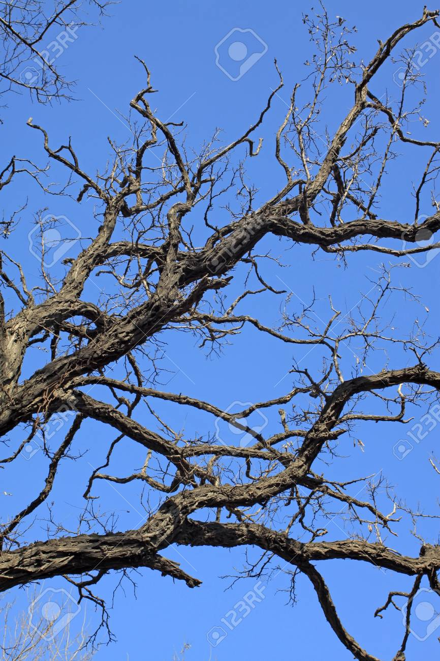 leafless trees have bizarre appearance in the blue sky, Qinhuangdao City, Hebei Province, China,2009. Stock Photo - 7475693