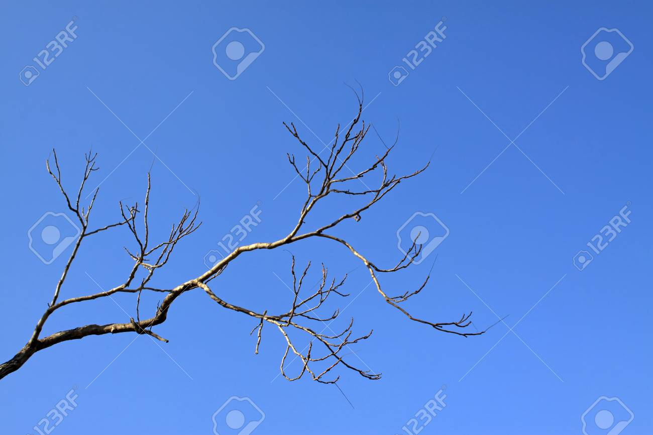 leafless trees have bizarre appearance in the blue sky, Qinhuangdao City, Hebei Province, China,2009. Stock Photo - 7474600