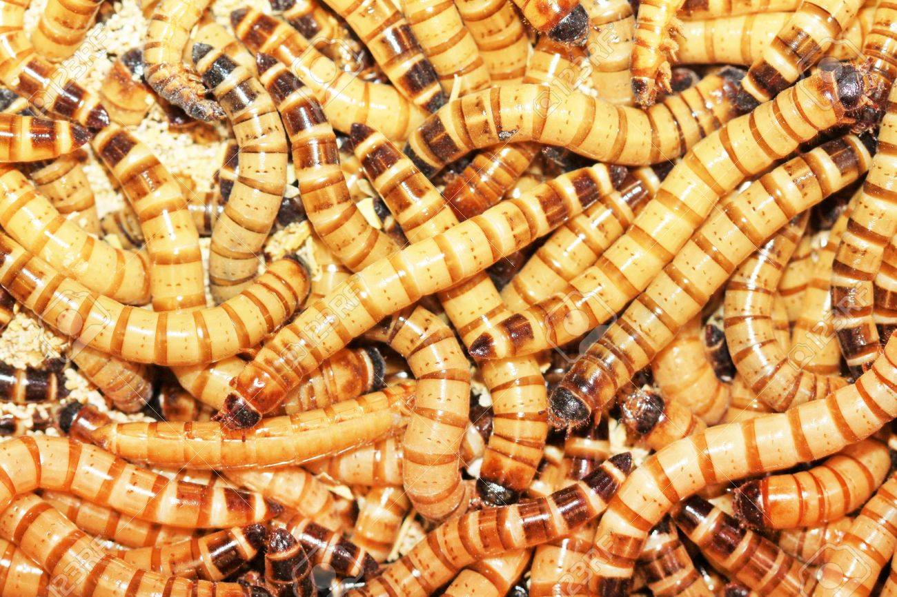 Many insects in together, very large Numbers insects Stock Photo - 20880411