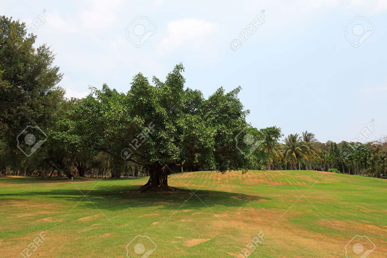 Tropical Botanical Garden, Sanya, China - 165704248
