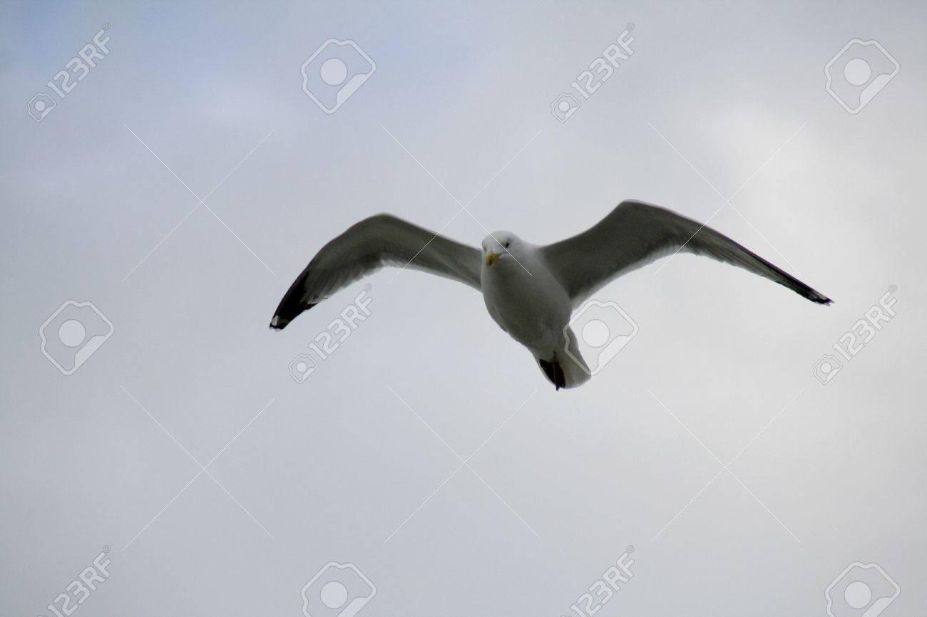 Flying Stock Photo - 5524639