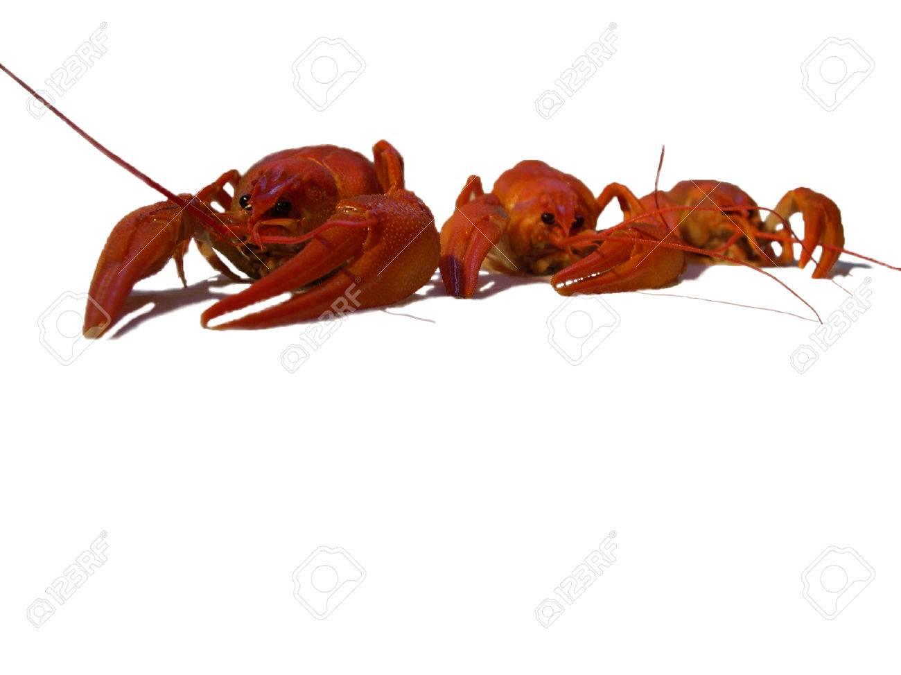 Three big red crayfish on the white backround Stock Photo - 1599784