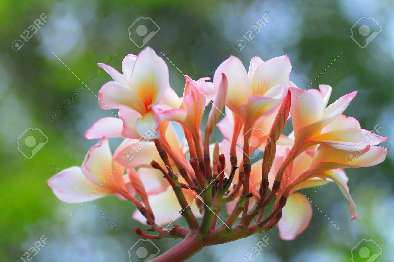 nice flower stock photo, picture and royalty free image. image, Beautiful flower